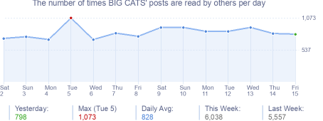 How many times BIG CATS's posts are read daily